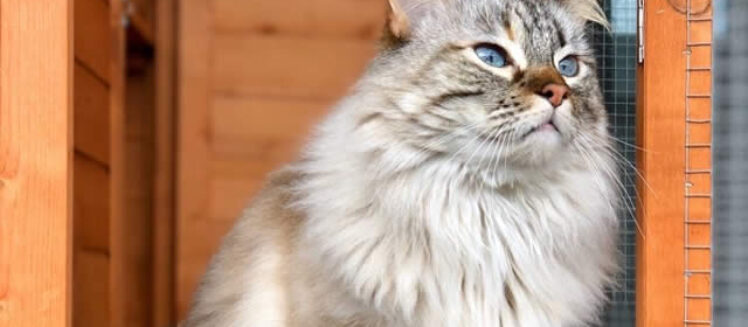 Cat Caves: Tips for Building a Catio for Your Cat