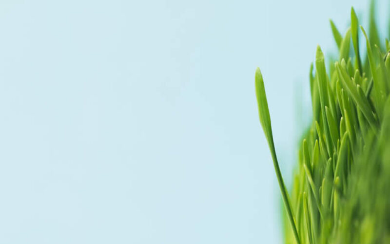 <span>Sunday Morning Tip for April 25:</span> Time Saving Tricks for Your Spring Lawn