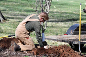 Discover The Best Time to Plant Trees & Tips To Help