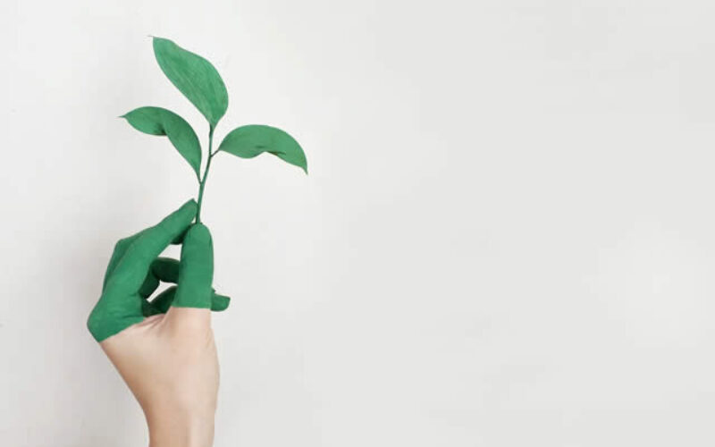 The Benefits of Moving into a Green Home