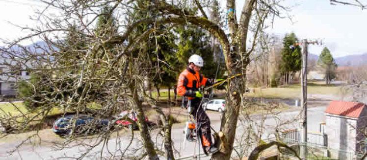 Checklist For Hiring The Best Tree Arborist