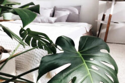 <span>Sunday Morning Tip for July 04:</span> 3 Easy and Affordable Updates for Your Home