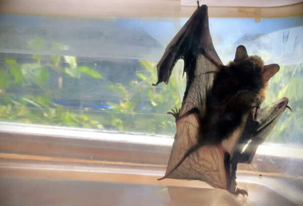 Steps To Remove a Bat From Your Home