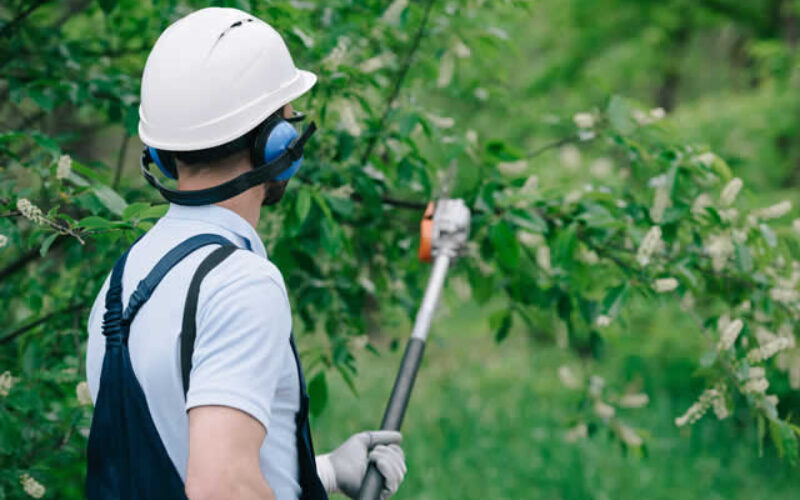 All You Need To Know About Tree Pruning Services