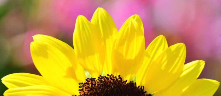 Gardening Maintenance Tips