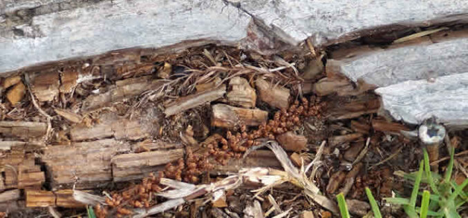 4 Things to Look for When You Expect You Have Termites
