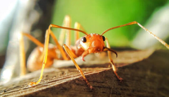 How to Get Rid of Ants and Other Bugs