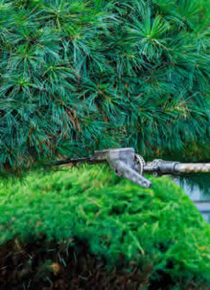 The Importance of Backyard Maintenance When Selling Your Home