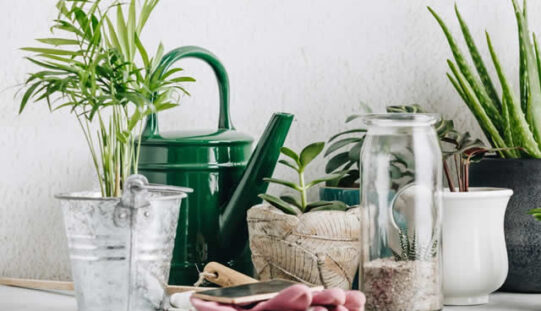How to Use Plants In Interior Design