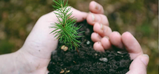 Six Ways You Can Keep Your Trees Alive All Year Round