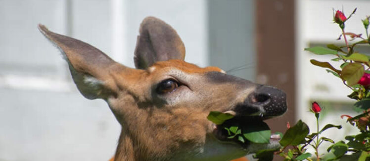 What to Know About Wildlife Removal Services