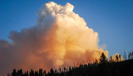 How to Make Your Home More Resistant to Wildfires