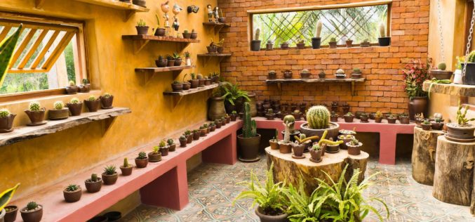 Sun Room Dedicated to Cactus