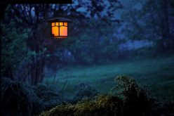 Lighting The Way Through Your Garden With Pathway Lighting