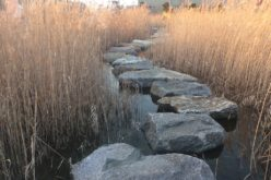 Using Stepping Stones as Your Walkway or Pathway