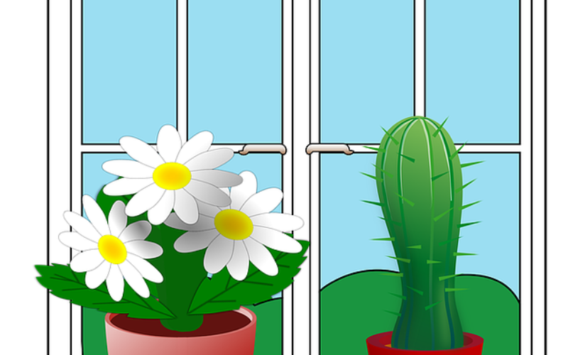 House Plants Can Help You Go Green