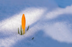 Let's Welcome the First Day of Spring