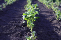Time To Start Your Vegetable Garden