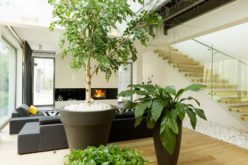 <span>photo image analysis:</span> Indoor House Trees for Bold Decor