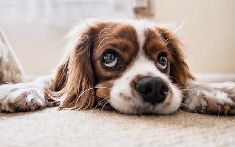 Where Would Carpet Flooring Look (Work) Best?