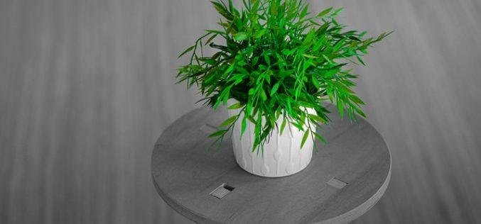 Decorative Plant Stands as Decor