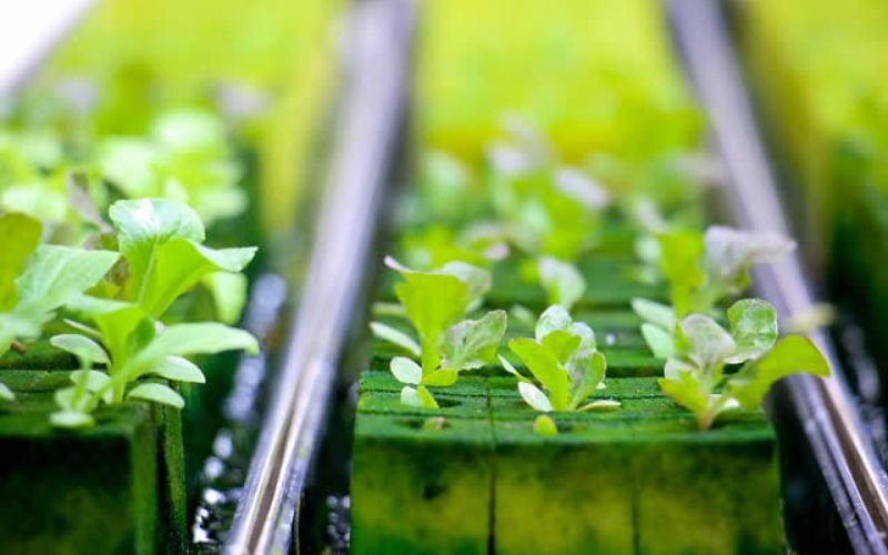 Hydroponic Gardening – An Illustration of How