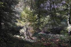 Illuminating Your Landscape Design