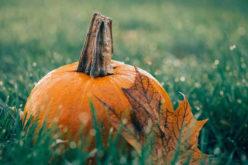 Celebrating the Thanksgiving Harvest
