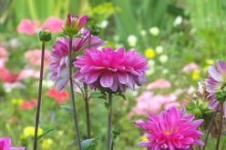 Landscaping with Perennial Flowers