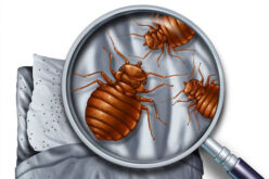 Bed Bug Cleaning and Removal