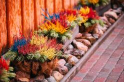 Get Creative: 5 Ways to Update Your Garden This Summer