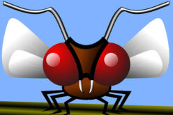 The Backyard Mosquito – Our Favorite Outdoor Pet