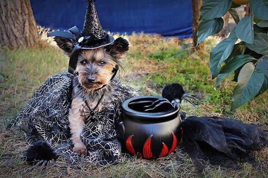 type of halloween costume