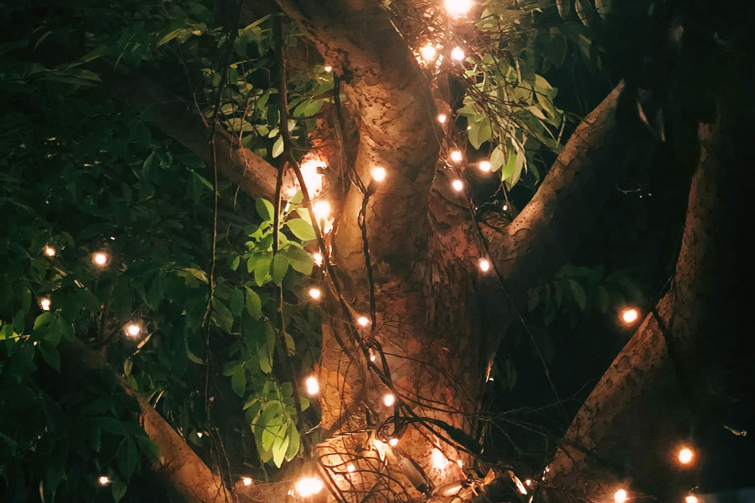 decorate home with holiday lighting