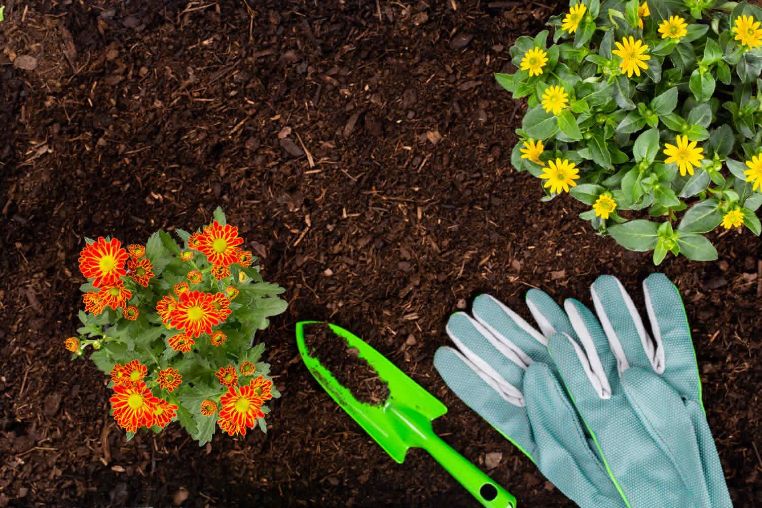 how to grow a plant garden