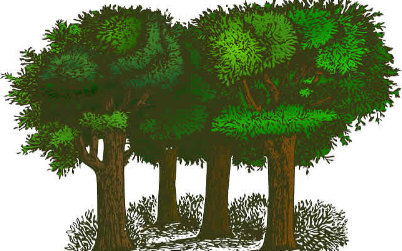 4 Simple Steps To Plant A Tree the Right Way