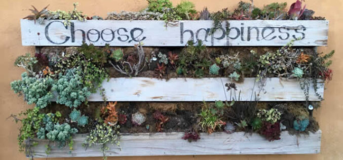Useful Tips for Cultivating A Vertical Garden