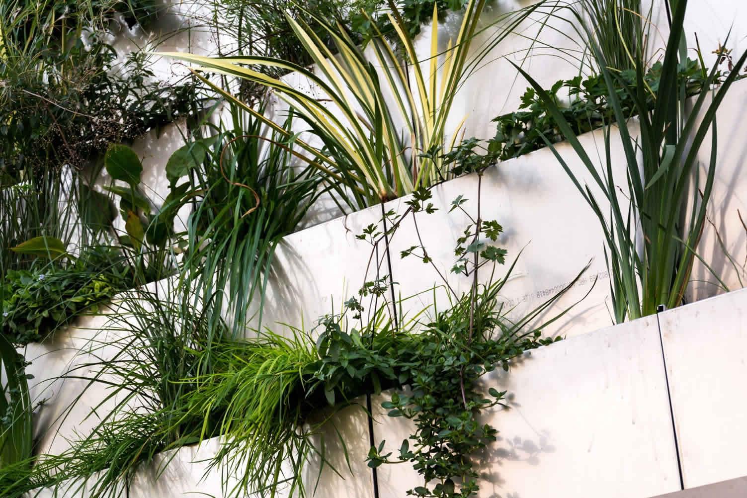 cultivating a vertical garden