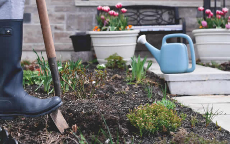 How To Landscape Your Backyard On a Budget