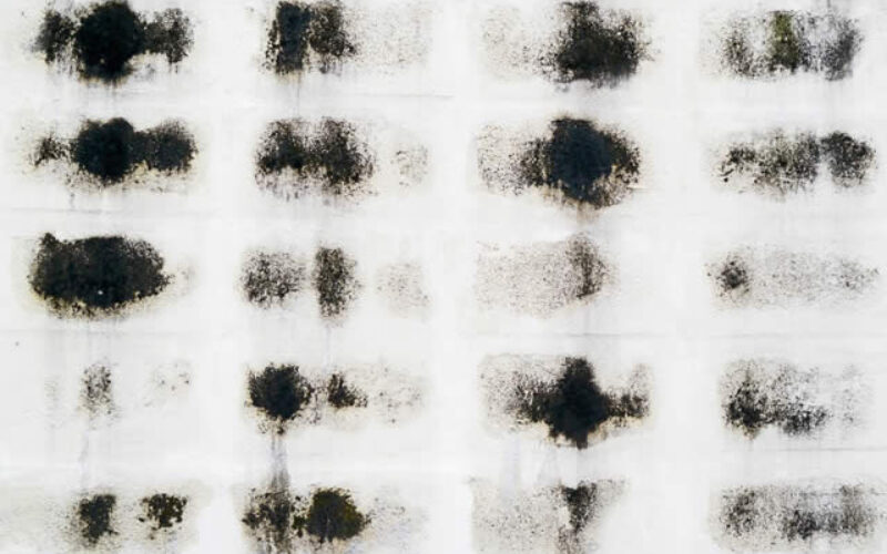 Reasons Why Mold Remediation Is Crucial