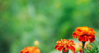 7 Ways to Make Your House Garden Ready for Selling