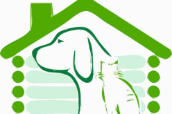 Everything To Consider Before Building a Doghouse