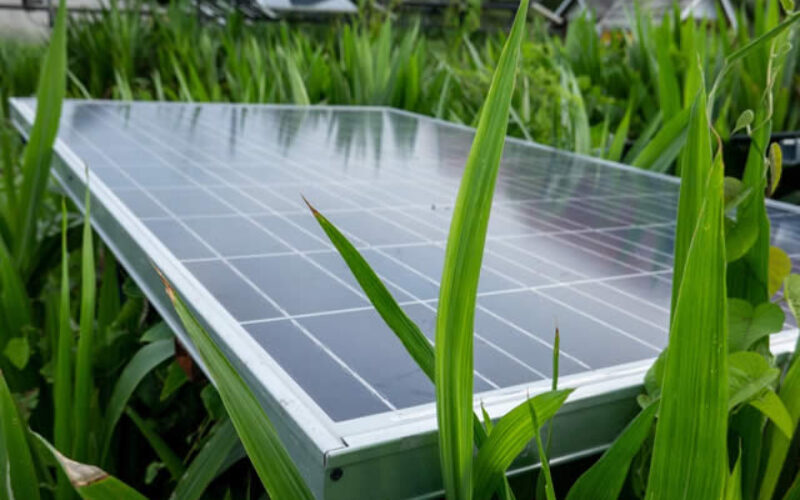5 Ways to Update Your House to Go Green