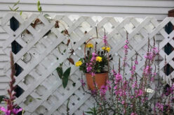 What Kind of Lattice Screening Fits You and Where to Install It